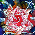 Spiral Star by Melody Carr
