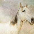Spirit Horse by Terry Fleckney