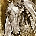 Spirit by Lana Trussell