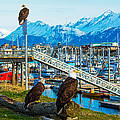 Spirit Of Homer Spit Boat Harbor by Debra  Miller