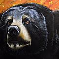 Spirit Of The Bear by Jurek Zamoyski