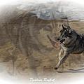 Spirit by Paulina Roybal