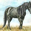 Spirit Wild Horse In Sanctuary by Linda L Martin