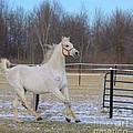 Spirited Horse by Kathleen Struckle