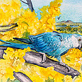 Spix's Macaw - A Dream Of Home by Kitty Harvill