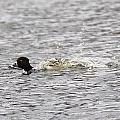 Splash by Bonnie Sams