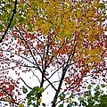 Splash Of Autumn Colors by Sonali Gangane