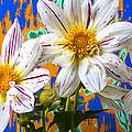 Splash Of Color by Garry Gay