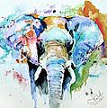 Splash Of Colour by Steven Ponsford