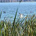 Splashing In The Lake by Jo Jurkiewicz