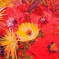 Splashy Floral II by Anne-Elizabeth Whiteway