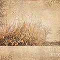 Splendor by Betty LaRue