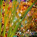 Splendor In The Grass by Judi Bagwell
