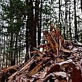 Splintered Hemlock by Jake Donaldson