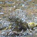 Splish Splash Bird Bath by Lilliana Mendez
