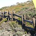 Split Rail Fence Yellow by Barbara Snyder