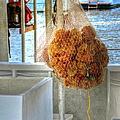 Sponge Bob by Debbi Granruth
