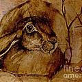Spooked Hare by Angel Ciesniarska