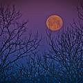 Spooky Beauty by Shirley Tinkham