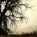 Spooky Tree by Marilyn Hunt