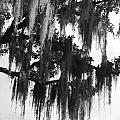Spooky Trees by Cyndi Lenz