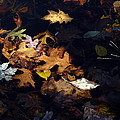 Spot Lighting by Marcia Lee Jones