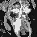 Spotted Dog Black And White by Minding My  Visions by Adri and Ray