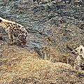 Spotted Hyena Pups In Kruger National Park-south Africa by Ruth Hager