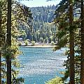 Forrest Mountain Trees Lake Scenic Photography Lake Gregory San Bernardino California - Ai P. Nilson by Ai P Nilson