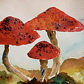 Spotted Mushrooms by Beverley Harper Tinsley