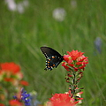 Spotted On Wildflower by Amy Stuart Langlo