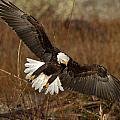 Spread Eagle by Shari Sommerfeld