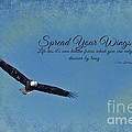 Spread Your Wings by Pam  Holdsworth