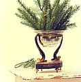 Sprigs Of Pine by Amanda Elwell
