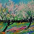 Spring 452121 by Pol Ledent