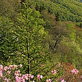 Spring Along The Blue Ridge by Mountains to the Sea Photo