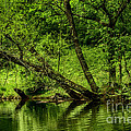 Spring Along West Fork River by Thomas R Fletcher