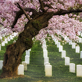 Spring Arives At Arlington National Cemetery by Susan Candelario