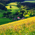 Spring At Black Forest by Shuwen Wu