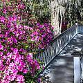 Spring At Magnolia Plantation 4 by Walt  Baker