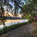 Spring At Magnolia Plantation 6 by Walt  Baker