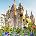 Spring At Temple Square by Emily Dickey