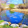 Spring At The Pond by Marilyn Diaz