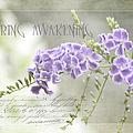 Spring Awakening by Julie Palencia
