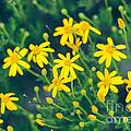 Spring by Barbara Shallue