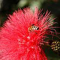 Spring Bee Sweet As Honey by George Kenhan