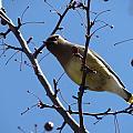 Spring Bird And Berries by Anita Burgermeister