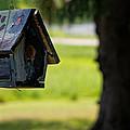 Spring Birdhouse by Lars Lentz