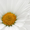 Spring Bloom by Dennis Reagan
