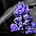 Spring Bloom by Kip Krause